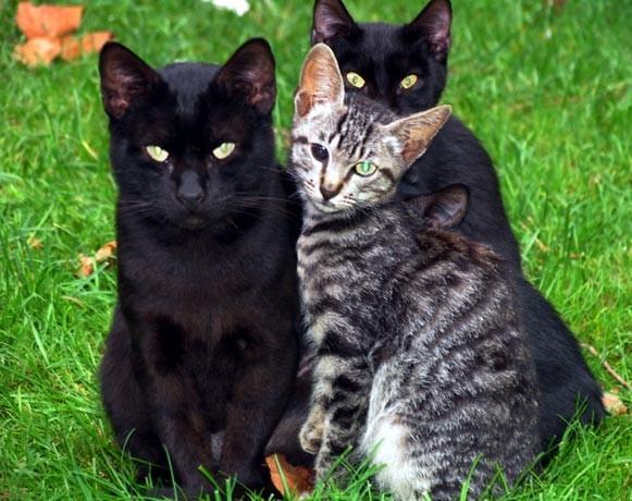 gatos-1