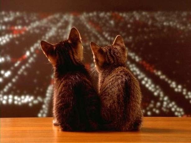 gatos-olhando-a-cidade_942_1024x768